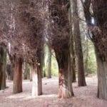 σημάδι δέντρα