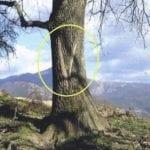σημάδι σε δέντρο