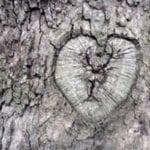 σημάδι σε δέντρο αντάρτες λίρες