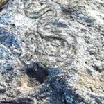 σημάδι φίδι