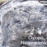 σημάδι με φίδι σε βράχο