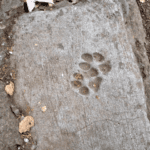 σημάδι πέτρα