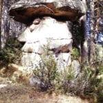 σημάδι μανιτάρι σε βράχο