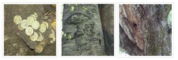 σημάδια δέντρα