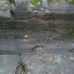 σημάδι ζώο σε βράχο