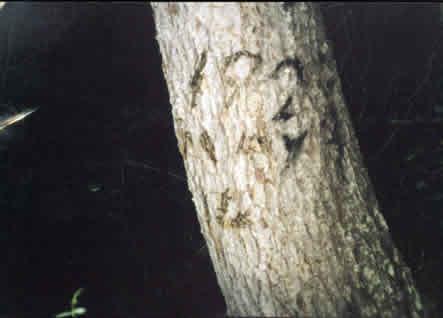 σκαλιστό σημάδι σε δέντρο