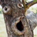 περίεργα δέντρα