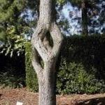 άγριο δένδρο